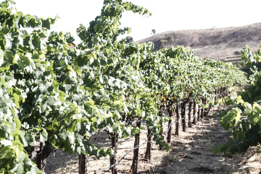 Kieu Hoang Winery