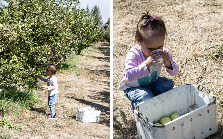 Apple Picking at Gabriel Farm